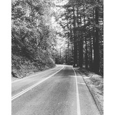 Caliparks : Henry Cowell Redwoods State Park Local Parks, Park Photos, Park City, Regional, State Parks, Country Roads, California, Instagram, The California
