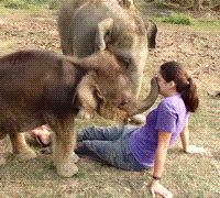 """bassmonstertiff:jinyii: tastefullyoffensive:  """"Where is your trunk, human?"""" [x]  Cutest elephants ever.  hi how are you! my name is Lelophent *tries to shake, feels around awkwardly, finds nose* oh… your trunk is kinda small… hm… well momma said everyone is different and special… nice to meet you """"shakes stubby human trunk*"""