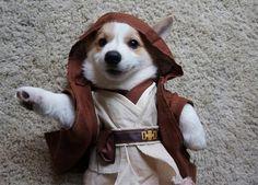 Corgi-Wan Kenobi...