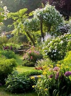 Cottage garden dreams...