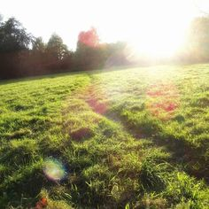 #Herbstlicht  - ein wenig Sonne nach dem Sturm.