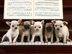 perritos pianistas http://javi29clases.blogspot.com.ar/