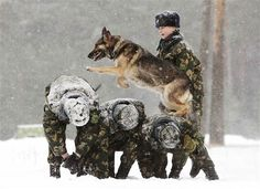 Image: A Belarussian military instructor trains her dog in a frontier guards'…