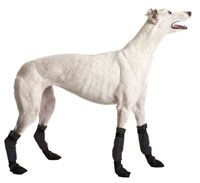 Greyhound Booties