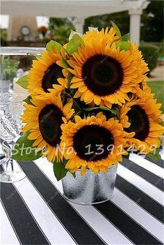 40 pcs/bag Giant Sunflower Seeds Bonsai Flower Seeds Sunflower Russian Sunflower Seeds For Home Garden Planting