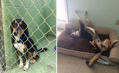 TVNET :: Животные - Трогательное «до и после»: фото животных, взятых из приюта