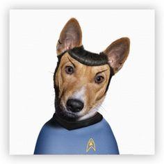 dog + famous celebrity portrait series (spock)