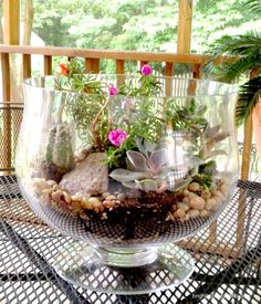 idea, succul garden, diy plant succulents, succulent gardens, terrarium, step video, diy project, video tutori, diy step
