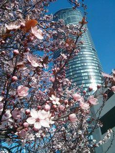 Wiosna zawitała do Wrocławia 20.03.2014 :) Sky Tower.