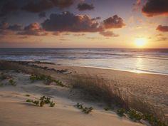 Google Image Result for http://imgc.artprintimages.com/images/art-print/ian-trower-sunrise-on-tofo-beach-tofo-inhambane-mozambique_i-G-59-5954-KAORG00Z.jpg