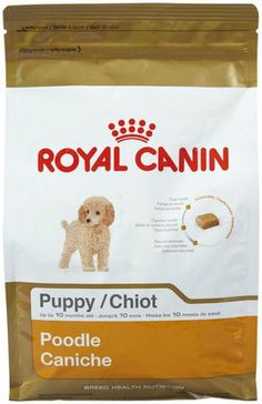 Royal Canin Poodle Puppy ~ Le cute! 8~} Love apricots.