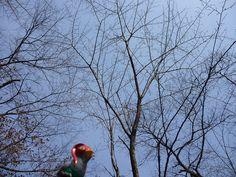 Unfezant in Yamatsuri, Fukushima 47 (Yamatsuriyama Park)