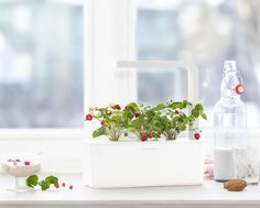 A super simple, zero-effort-required indoor herb garden that even someone with the blackest of thumbs can't mess up. | 26 Of The Coolest Things On Amazon Launchpad