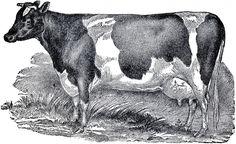 Vintage Farmhouse Image Cow - The Graphics Fairy