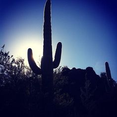 Tucson, Arizona | Photo via Instagram by @fixedexpressions | http://www.visittucson.org/