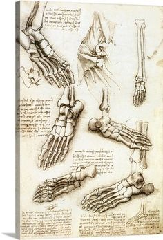Premium Thick-Wrap Canvas Wall Art entitled Foot anatomy by Leonardo da Vinci #greatBIGcanvas #Modernism