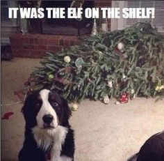I didn't do it, it was the elf on the shelf.