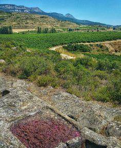 "If you visit Rioja enjoy ""Lagares rupestres"" between vineyards a piece of our wine history #tourism #winetours #travel #wine #winelover #turismo #enoturismo #experience #winetastelovers #riojawine #gastronomía #visitSpain #vino #viaje #tapas #winetasting #instariojawine #gastronomy #instawinetours #winecountry #wineries #worldplaces #winetrip #winetravel #viajar #grapevines #winetourism #winetourist #lp"