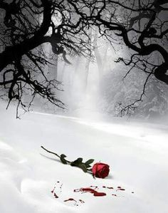The most beautiful landscape photos animated Flowers Gif, Beautiful Rose Flowers, Beautiful Gif, Beautiful Pictures, Flower Phone Wallpaper, Flower Wallpaper, Dark Photography, Amazing Photography, Beau Gif