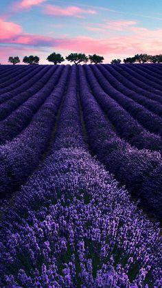 lina's garden — bellasecretgarden: (via Pin by Lina dePinner on...