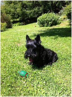 Buenos días! Este es Tango, otra de nuestras mascotas. Con la llegada del verano ya puede disfrutar de su juguete preferido en la finca de nuestro #hotelrural en #Asturias!