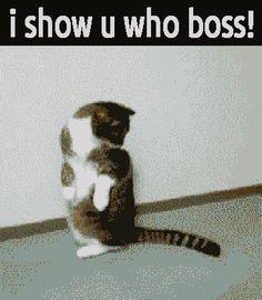 Cat Game Animals Giff #64410 - Funny Cat Giffs|Funny Giffs|Cat Giffs