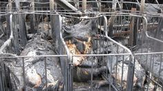 Petition, please S&S: Every year in Canada, tens to hundreds of thousands of animals suffer and die trapped inside barns that catch fire.    The animals confined in these buildings, often additionally restricted inside cages or stalls, experience terror and suffer unimaginable pain as they attempt to escape while fire rages... 57.591/16.5.17