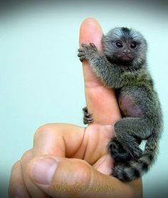 #Cute baby #animal picture , cute baby animal | Pic Fun Pic ...........click here to find out more http://googydog.com