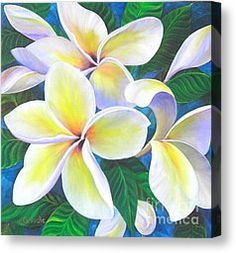 Hawaii Painting Canvas Prints - Plumeria Blossoms Canvas Print by Jerri Grindle
