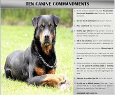 Ten Canine Commandments www.facebook.com/luvrotts