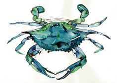 Watercolor print of Atlantic Blue Crab from original painting nautical art 5x7 by ssbaud on Etsy