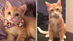 Ne Çabuk Büyüyorlar: Kedilerin Öncesi ve Sonrası 20 Fotoğrafı