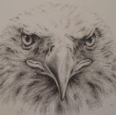 Bald Eagle Drawing - my sister is just showing off her ability to use a regular No. 2 pencil to create this spectacular drawing of a bald eagle. This drawing, for sale on her Etsy webpage, is perfect for any bird lover or any Harley Davidson fan! Amazing Drawings, Cool Drawings, Drawing Sketches, Amazing Art, Drawings Of Eagles, Beautiful Drawings, Sketching, Animal Drawings, Pencil Drawings