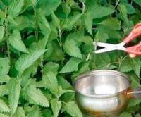 Se você tem diabetes: o chá desta planta vai normalizar a sua glicose rapidamente! - Ver Dicas