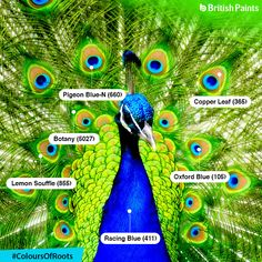 A symbol of grace, joy, beauty and love, the beautiful colours of Peacock rejuvenate and enlighten the environment. #ColoursOfRoots