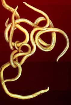 Survival First-Aid: Fighting the Scourge of Parasitic Worms