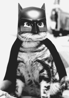 don`t worry catman is on the way//