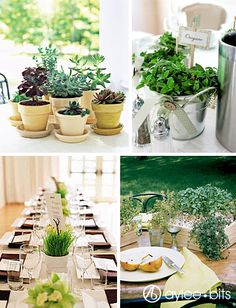 Potted Plant Centerpieces  http://www.ayleebits.com/2010/02/08/centerpieces-jars-cans-and-potted-plants/#