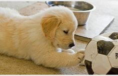 puppy wants to play soccer!