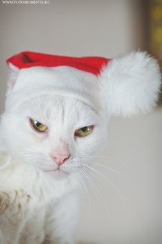 christmas cat by george fotomoments, via 500px