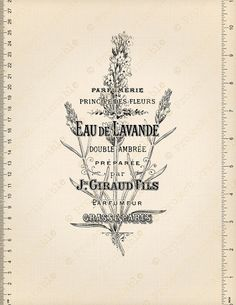 Instant Download Printable French Lavender by ProjectPrintable