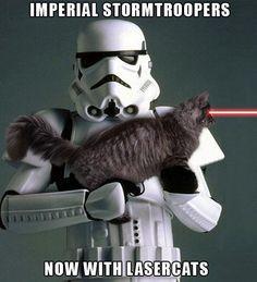 I want a laser cat.