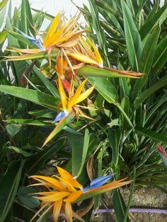 Flor ave del paraiso