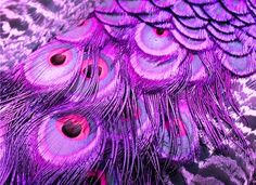 La La Lavender and Purple Peacock Feathers Purple Love, Purple Peacock, Peacock Art, Fuchsia, All Things Purple, Peacock Feathers, Shades Of Purple, Pink Purple, Purple Stuff