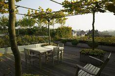 Creating An Urban, Rooftop Garden