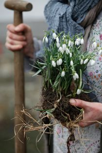 SMALL GREEN GIFTS Spontaneous invitations to tea or coffee you like to follow in the winter months. About straight pointed end hyacinths or first snowdrops from the garden as a little something everyone is pleased.