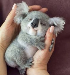 - Trending Still Arts & Designs for 2019 - Serena Slytherin - Nice wool koala. - Trending Still Arts & Designs for 2019 Nice wool koala. still arts cuteanimals koala needlefeltedanimals needlefelting woolfelt - Baby Animals Super Cute, Cute Little Baby, Cute Little Animals, Cute Funny Animals, Cute Cats, Cute Babies, Cutest Animals, Funny Dogs, Funny Bunnies