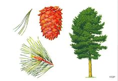 Illusztráció a könyv 14. számú Autumn Nature, Montessori Materials, Nature Journal, Elementary Science, Tree Forest, Garden Trees, Plantar, Nature Crafts, Science And Nature
