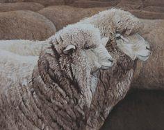 Corriedale Sheep  Jason Roberts Artist