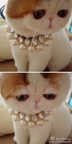 aww this is sooo cute.....but my cats would not want that shit around their neck lmao